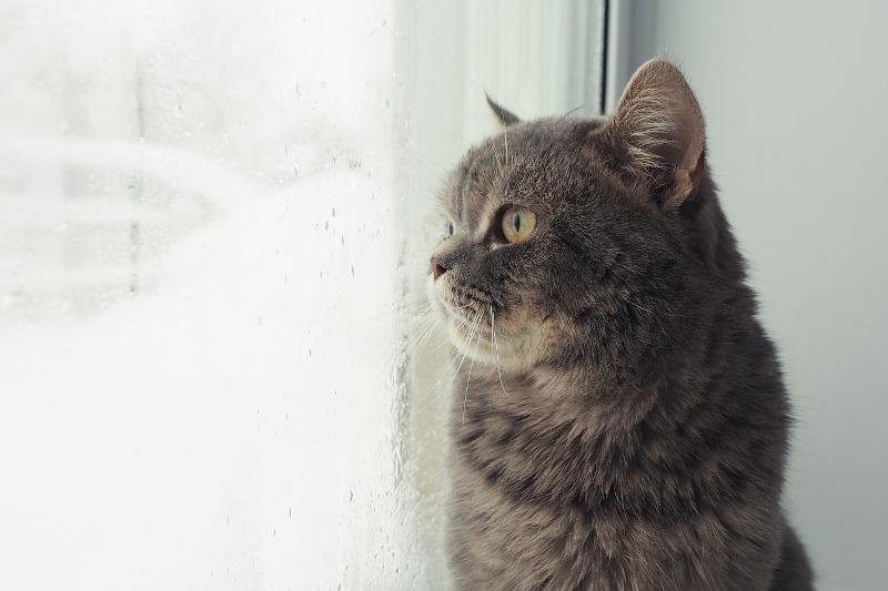 czym przemywać oczy kotu