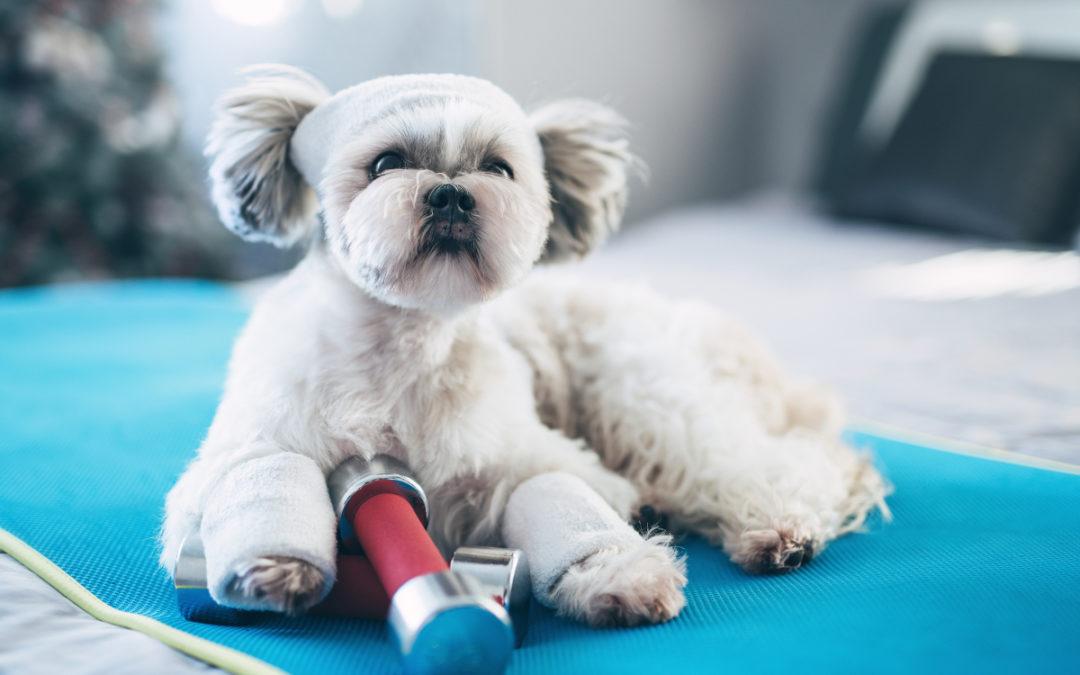 Jaką matę węchową dla psa wybrać w 2021 – Opinie oraz Ranking