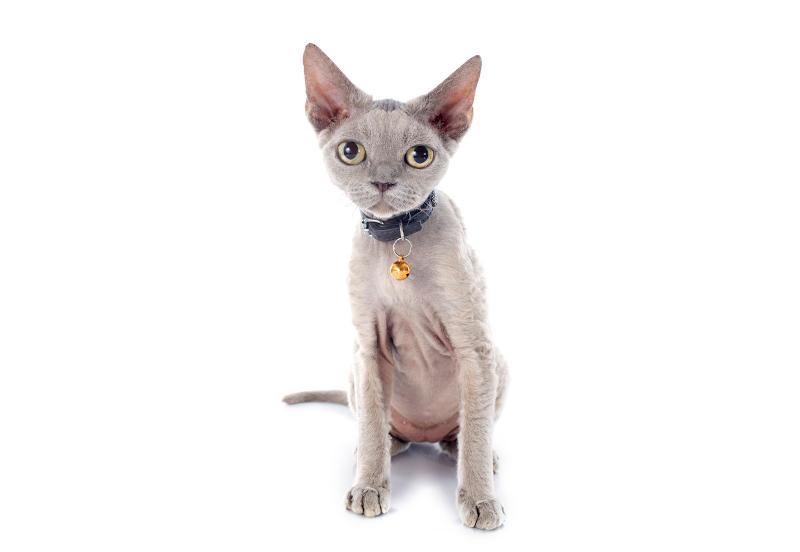jaka obroża na kleszcze dla kota