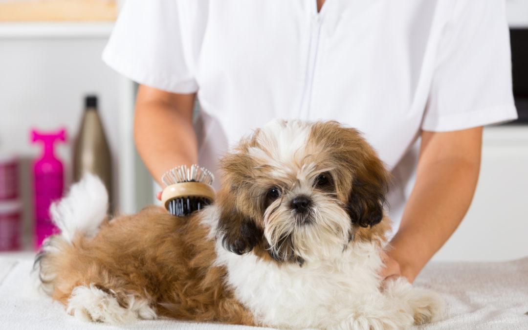 Jaki suchy szampon dla psa wybrać w 2021 – Opinie oraz Ranking