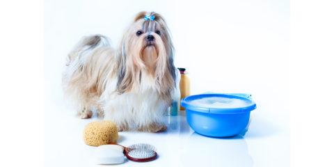 szampon dla psa shih tzu