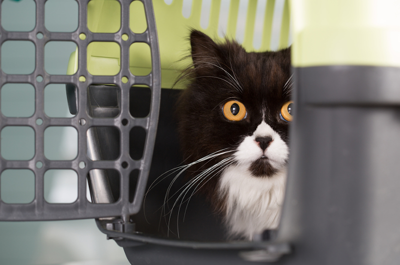 transporter dla kota cena