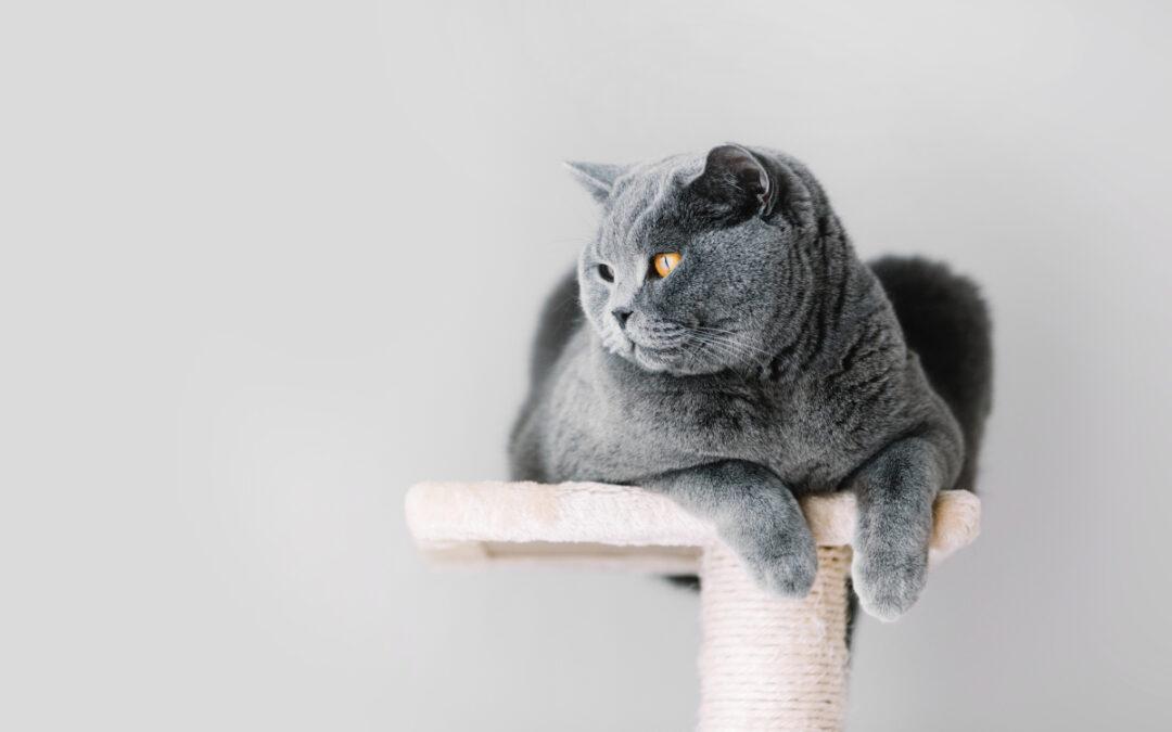 Jaki sznurek na drapak dla kota wybrać