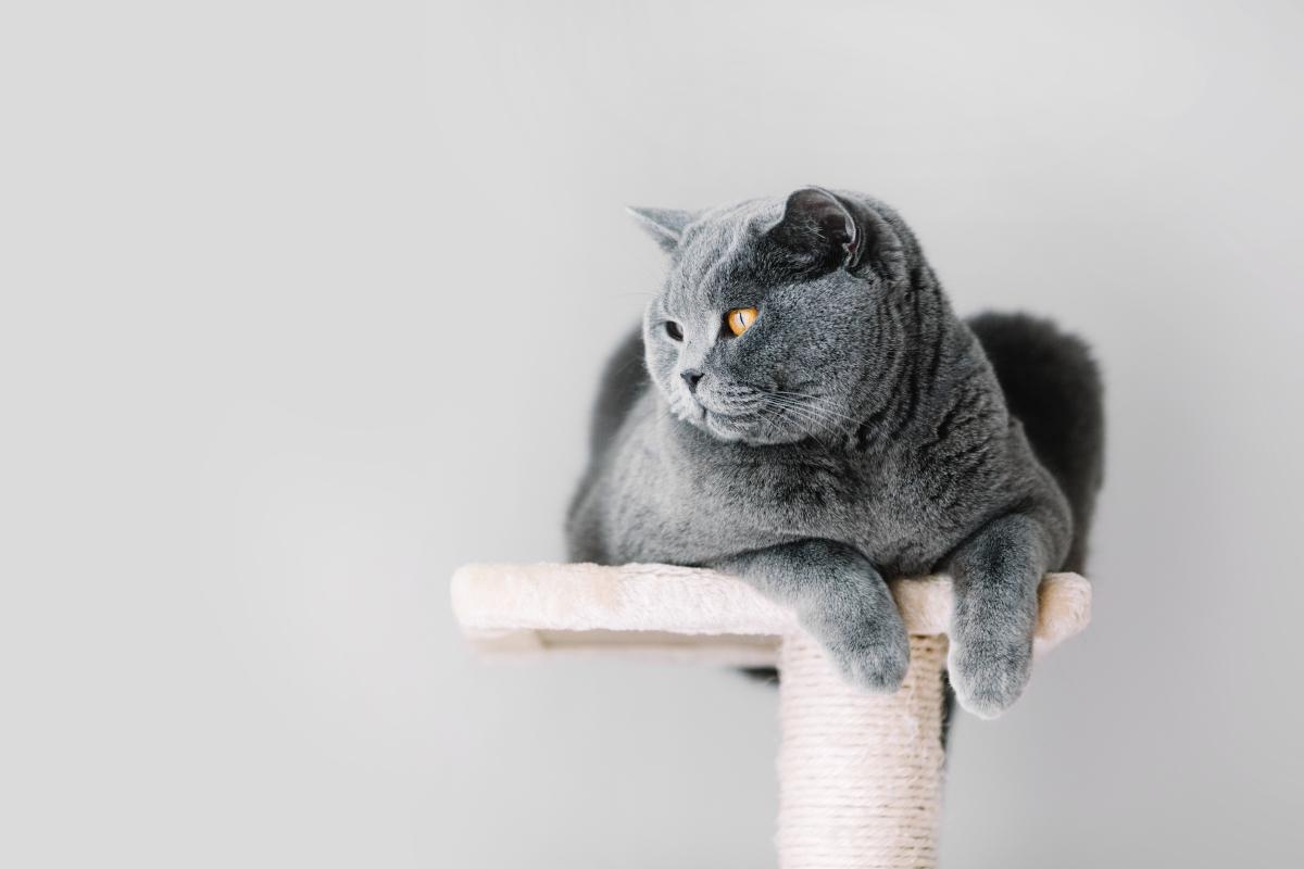 sznurek na drapak dla kota