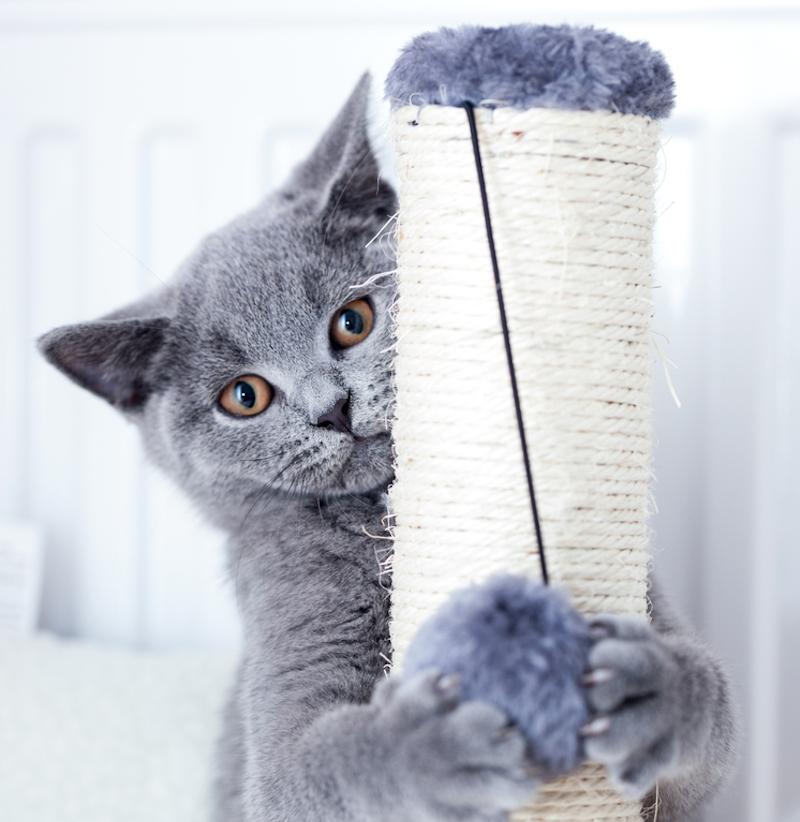 jaki sznurek na drapak dla kota