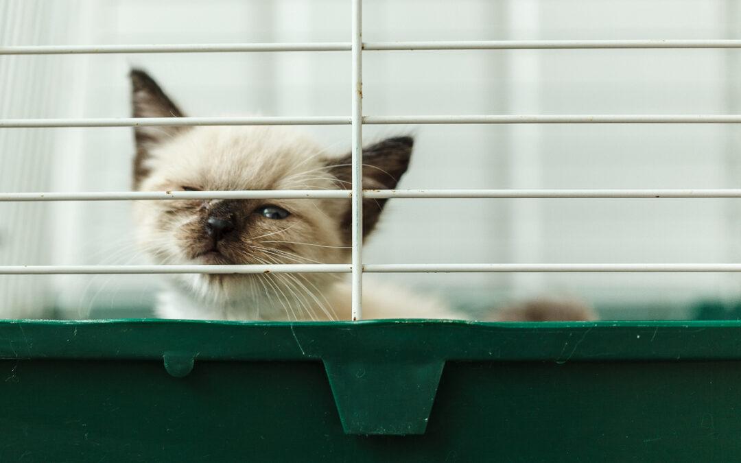 Jaka klatka dla kota będzie najlepsza w 2021 – Opinie oraz Ranking