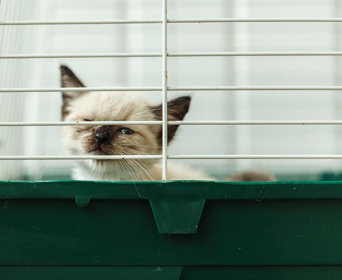 duza klatka dla kota