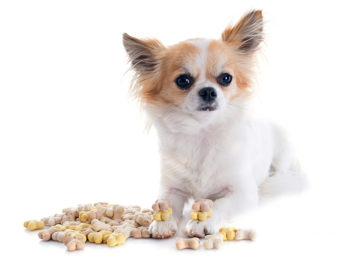 sucha karma dla psa opinie