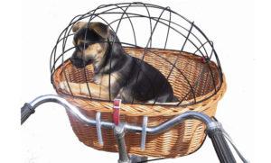 transporter na rower dla psa