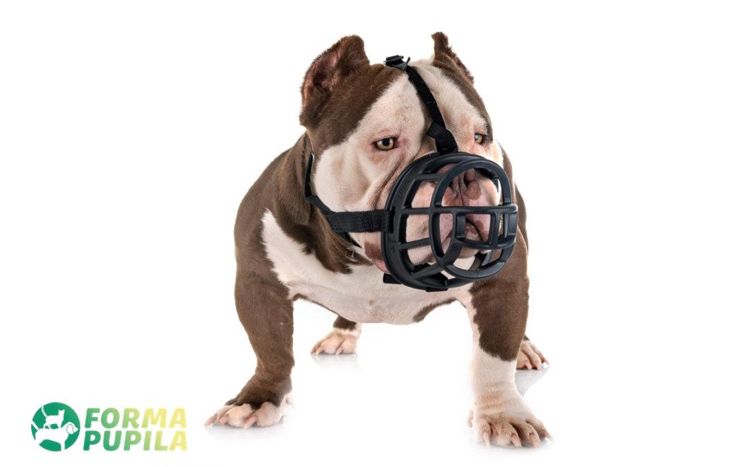 Jak dopasować kaganiec dla psa – Poradnik
