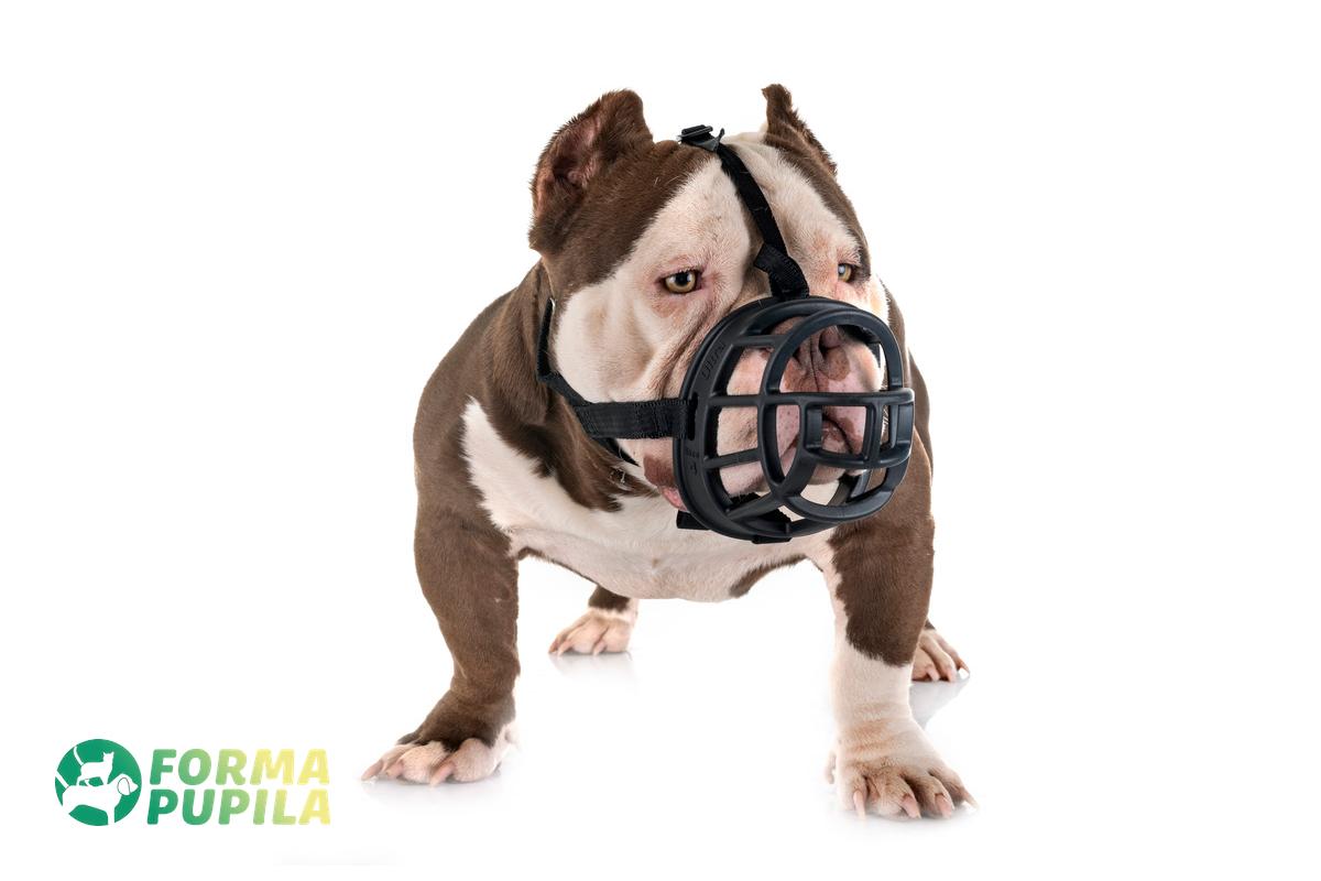 jak dopasować kaganiec dla psa