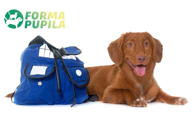 plecak dla psa na plecy