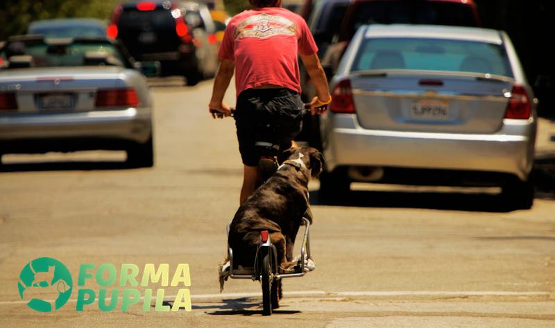 przyczepka do roweru dla psa