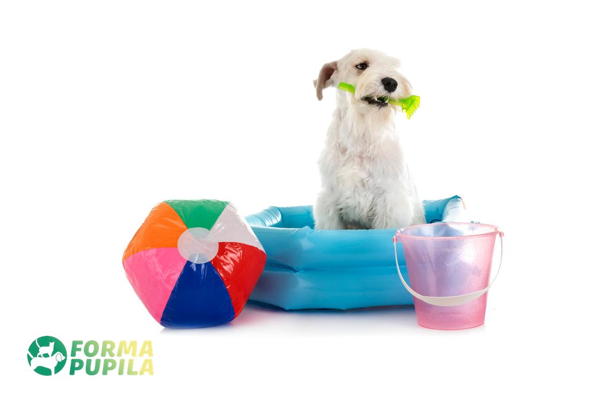 jak zrobić basen dla psa