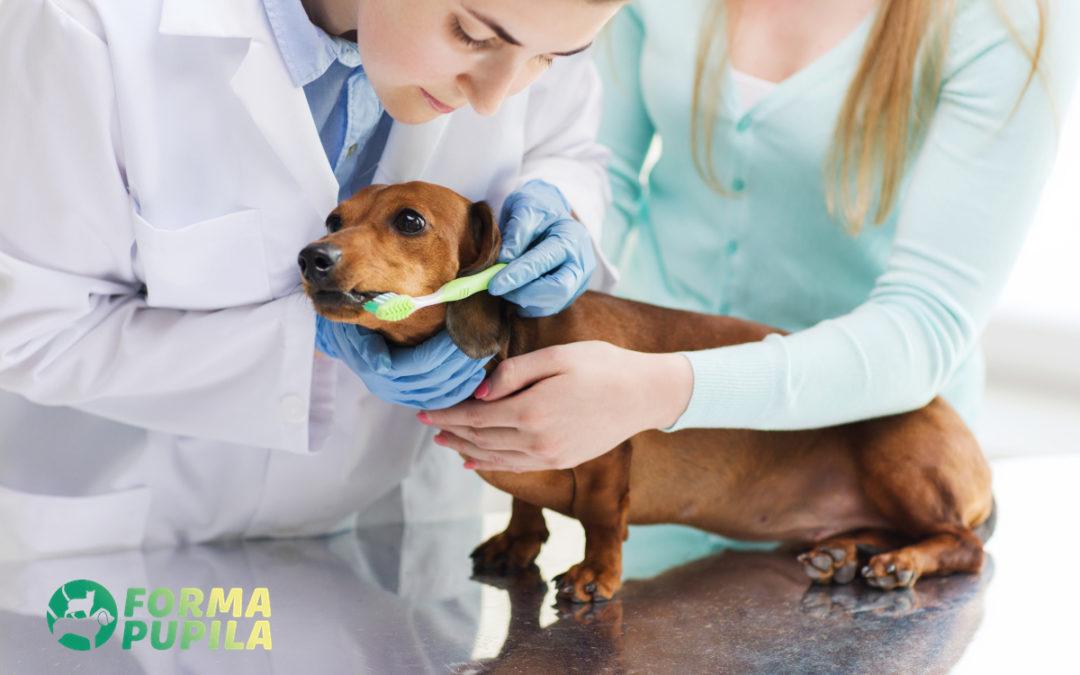 Czyszczenie zębów u psa – Poradnik