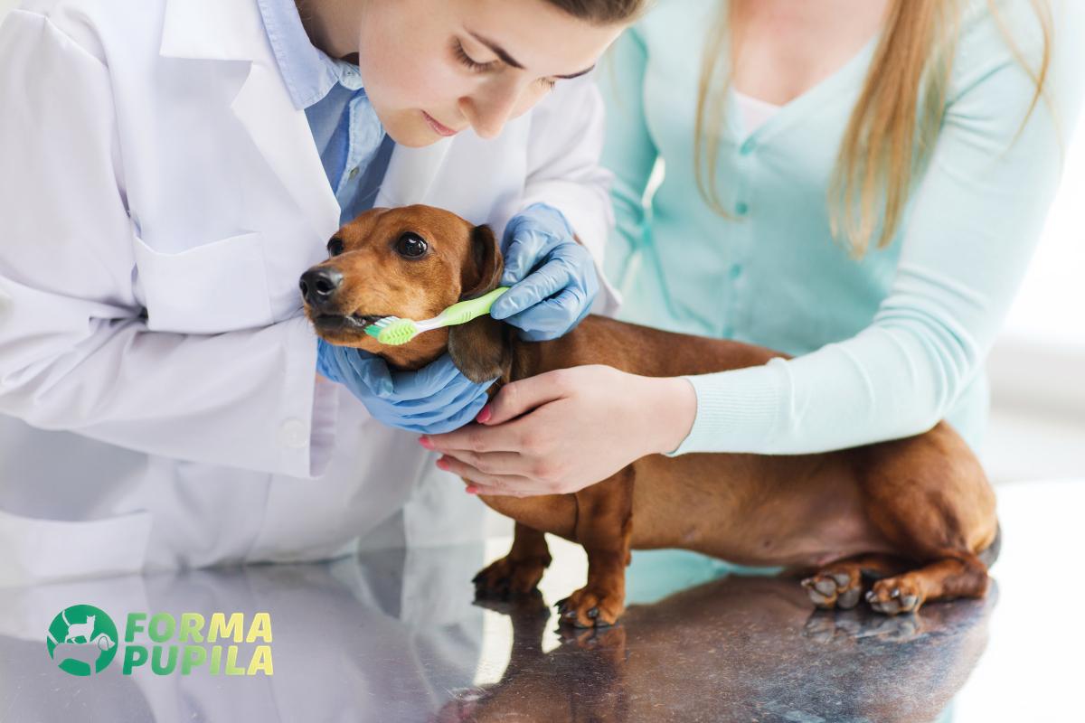 zabieg czyszczenia zębów u psa
