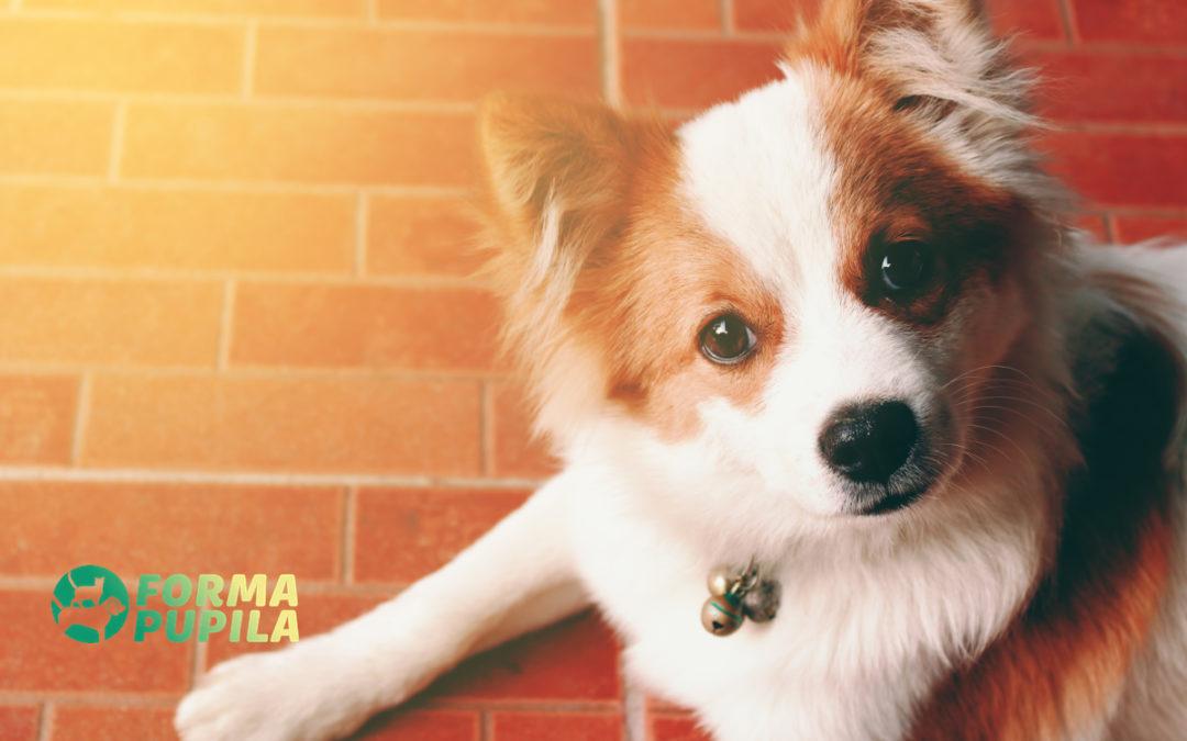 Jak czyścić psu łapy po spacerze – Poradnik