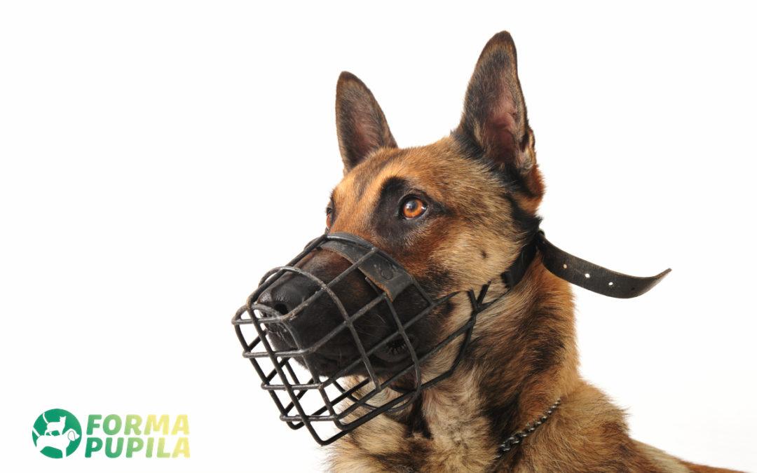 Kaganiec dla psa – Opinie oraz Ranking