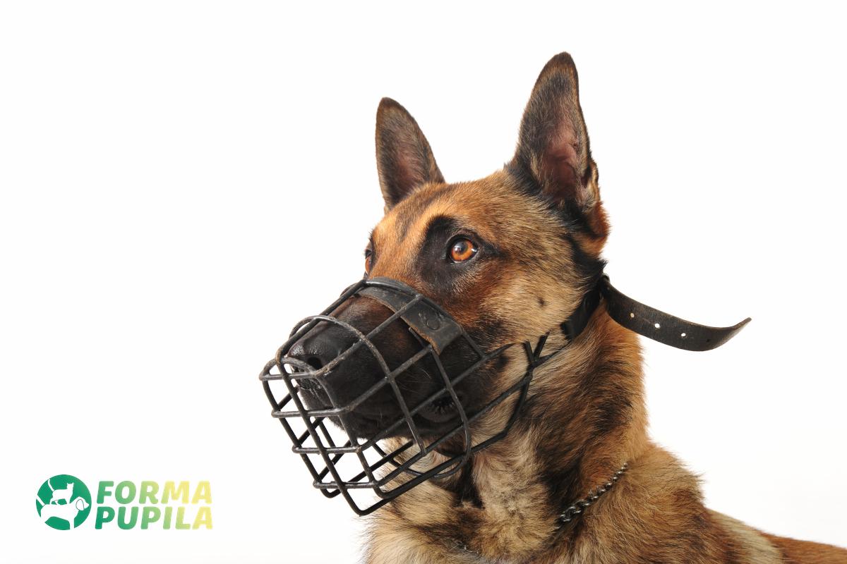 kaganiec dla psa przeciw jedzeniu