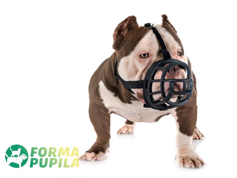 kaganiec dla psa fizjologiczny