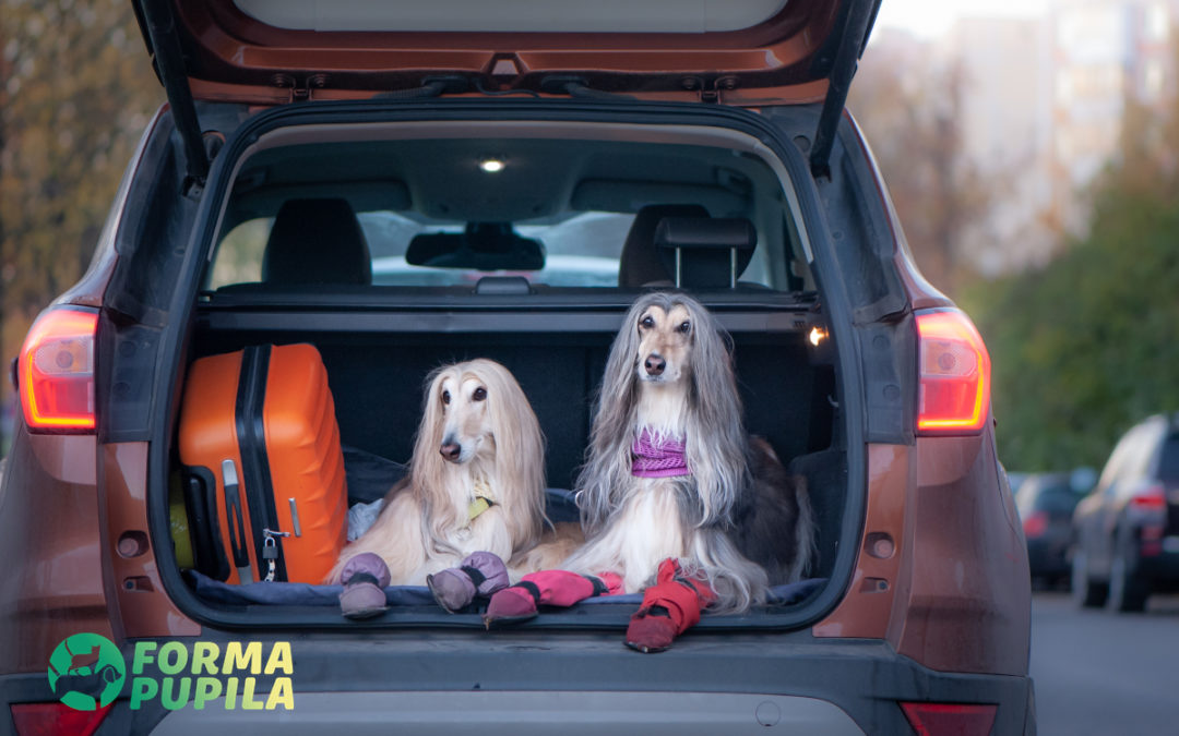 Przewożenie psa w samochodzie – Poradnik