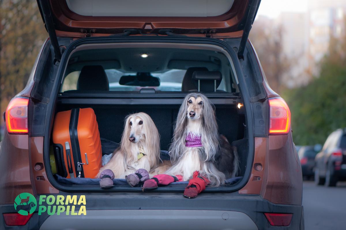 przewóz psa w samochodzie