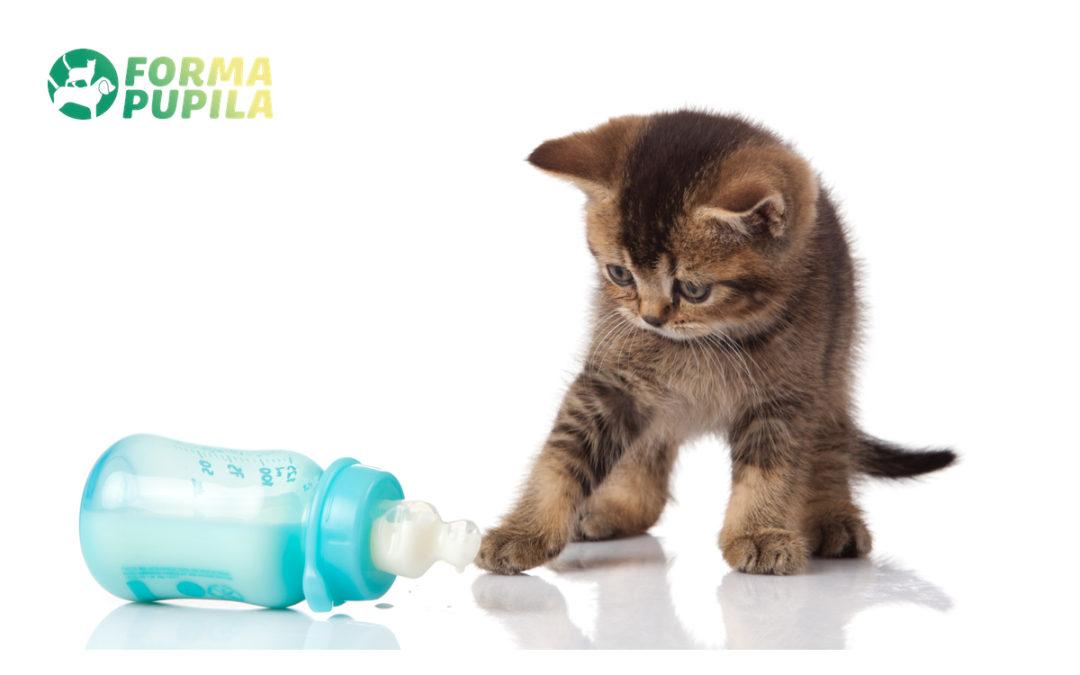 Jak karmić małego kotka – Poradnik