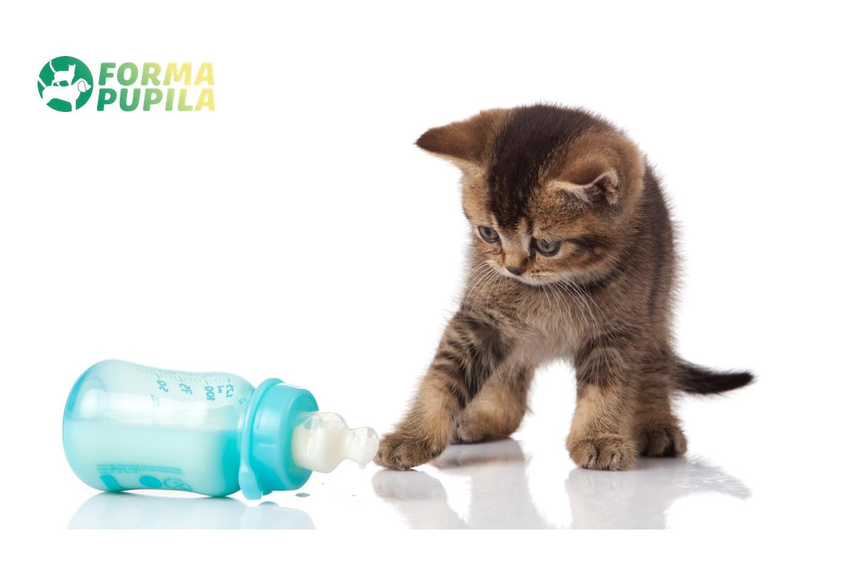 jak karmić małego kotka