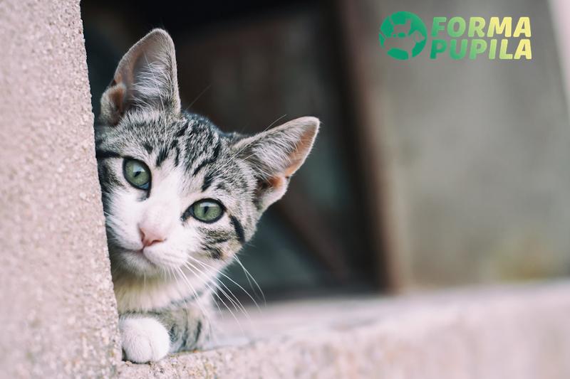 kocurek czy kotka