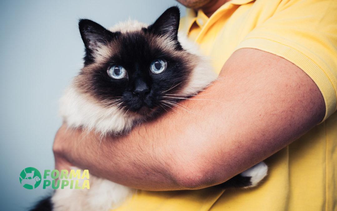 Kocur czy kotka – Poradnik