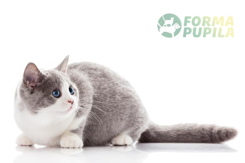 maszynka do strzyżenia kotów