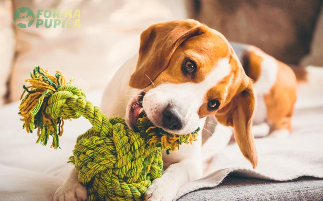 Jakie obcinaczki dla psa wybrać w 2021 – Opinie oraz Ranking