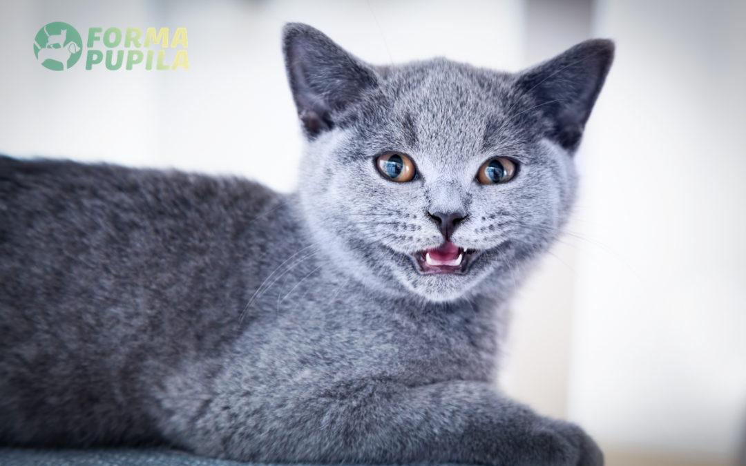 Jaka szczoteczka do zębów dla kota jest najlepsza w 2021 – Opinie oraz Ranking