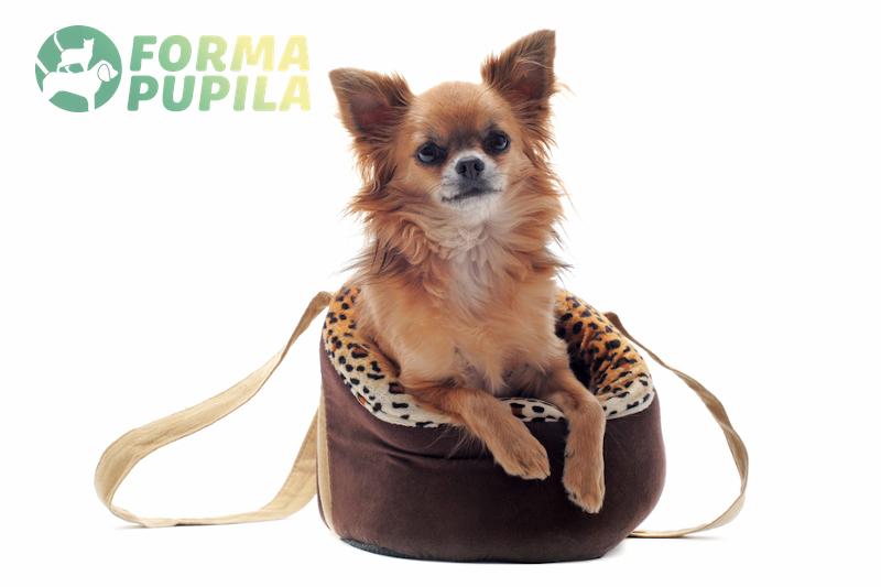 torba transportowa dla psa do samochodu