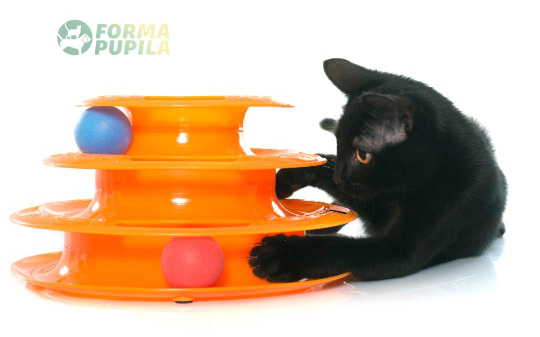 Jakie zabawki interaktywne dla kota wybrać w 2021 – Opinie oraz Ranking