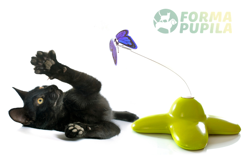 zabawki interaktywne dla kota